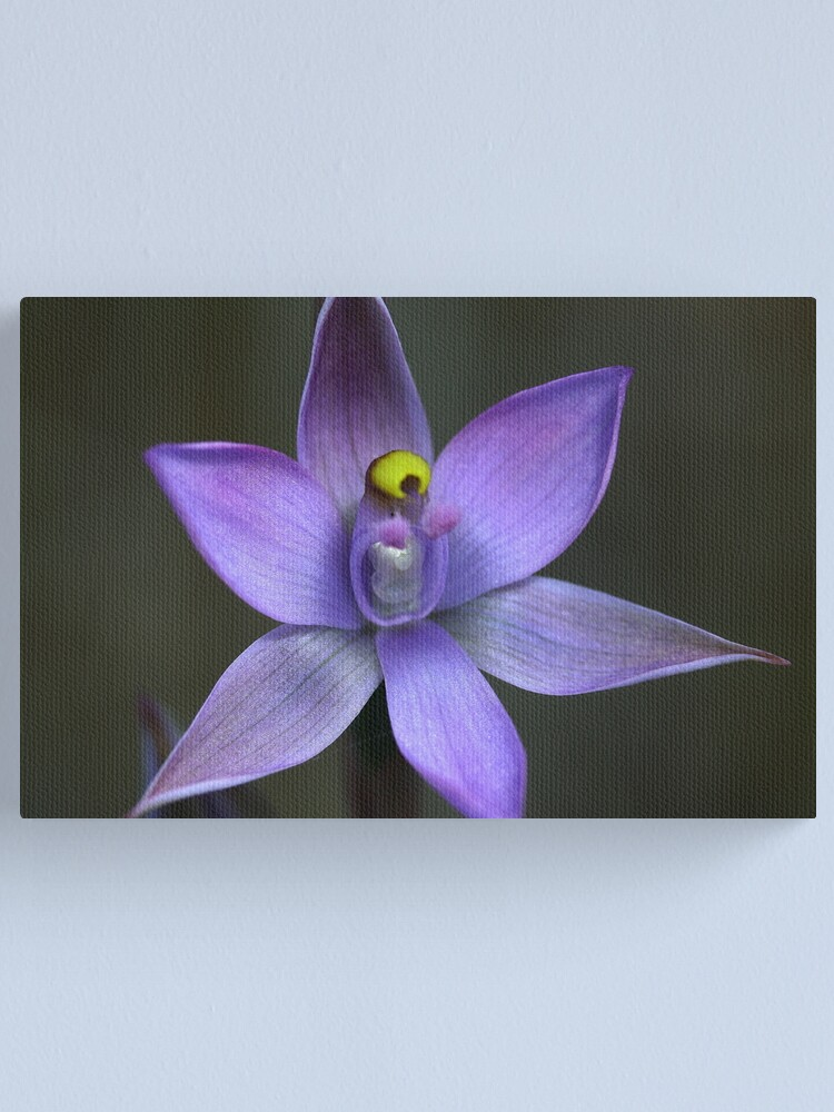 Alternate view of Thelymitra pauciflora Canvas Print