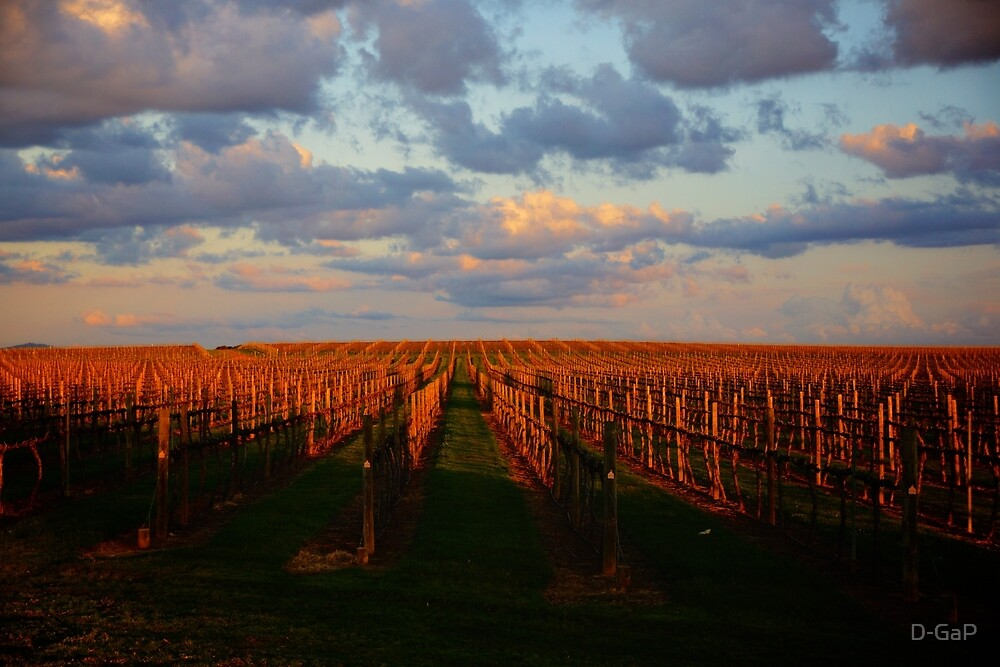 Vineyard Sunset by D-GaP