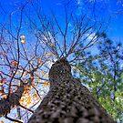 Sodalis Nature Park Tree Top by David Owens