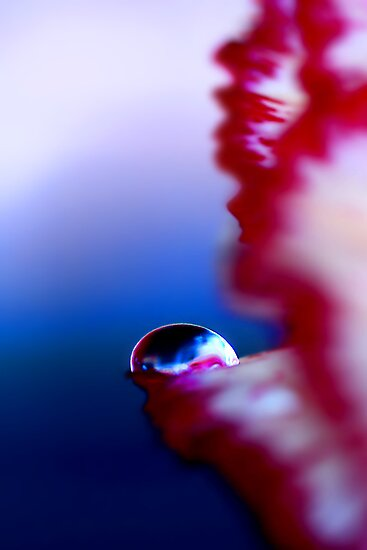 Colour Of Life XXXI by Damienne Bingham