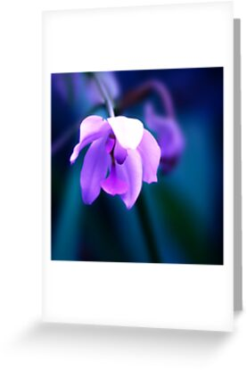 Colour Of Life XXVIII [Print & iPad Case] by Didi Bingham