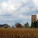 Barn in the cornfield by cherylc1