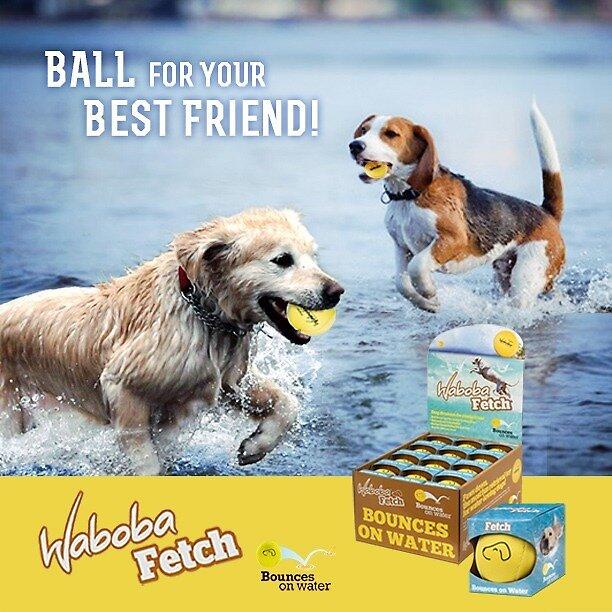 Waboba dog ball by baysideglobal