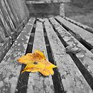 Leaf on a Bench by Sue Knowles