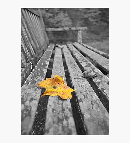 Leaf on a Bench Photographic Print