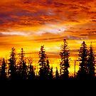 Sunrise - Alberta, Canada by Jessica Chirino Karran