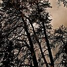 fall night by richard  webb