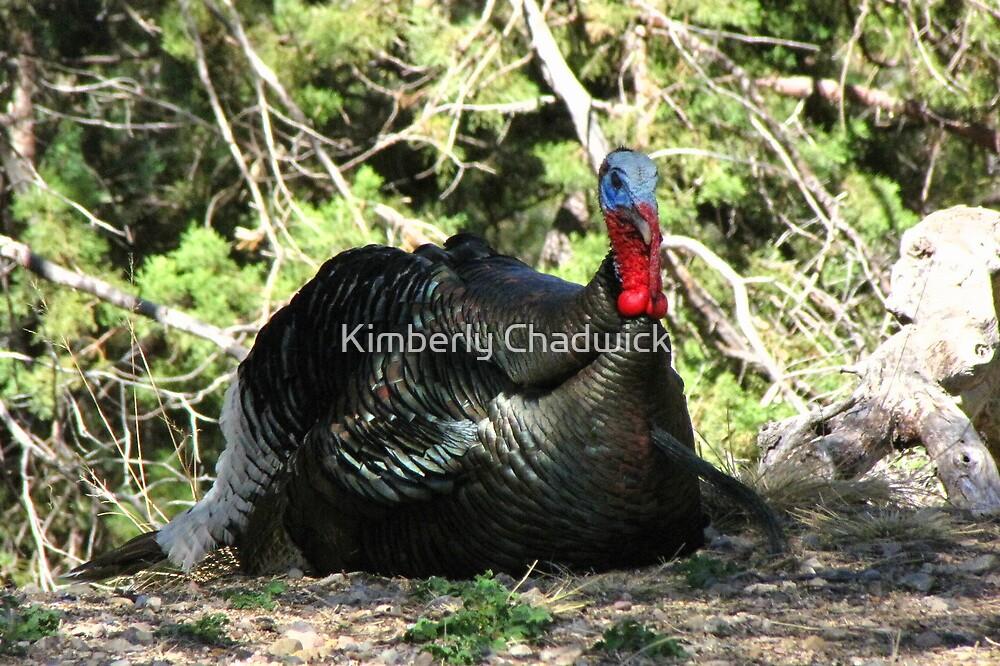 Gould's Wild Turkey ~ Male by Kimberly Chadwick
