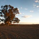 Tree in Paddock by Anthony Evans