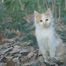 Happy Half-Stray Cat by Kasi ZX Xie