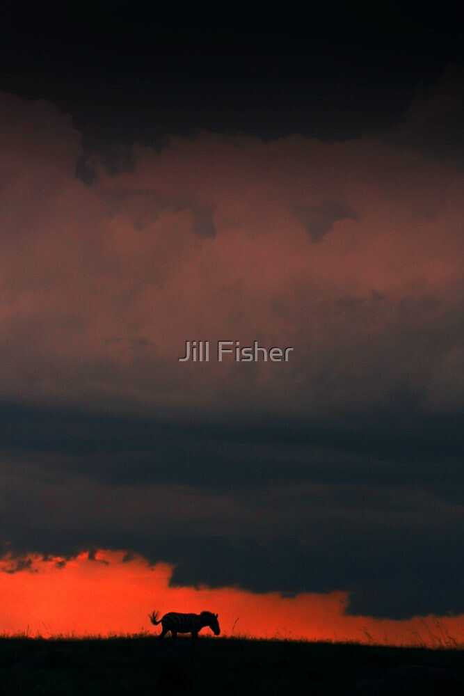 Zebra and Storm Clouds by Jill Fisher