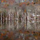 Autumn by Mary Ann Reilly