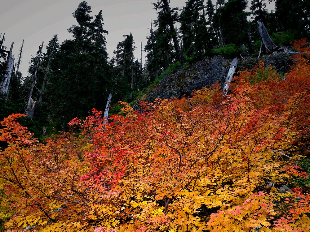 Put On Your Best by Charles & Patricia   Harkins ~ Picture Oregon