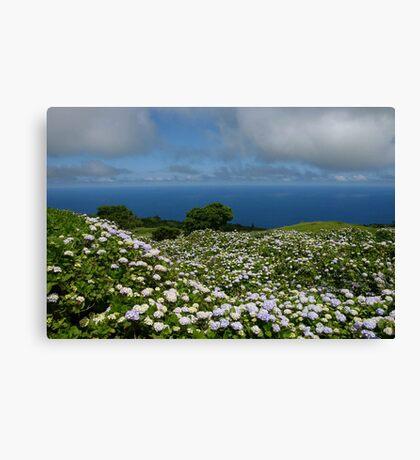 Hydrangeas in Horta, Azores Canvas Print