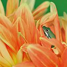 Orange dahlia + tree frog by Mundy Hackett