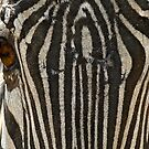 Zebra redux by Mundy Hackett
