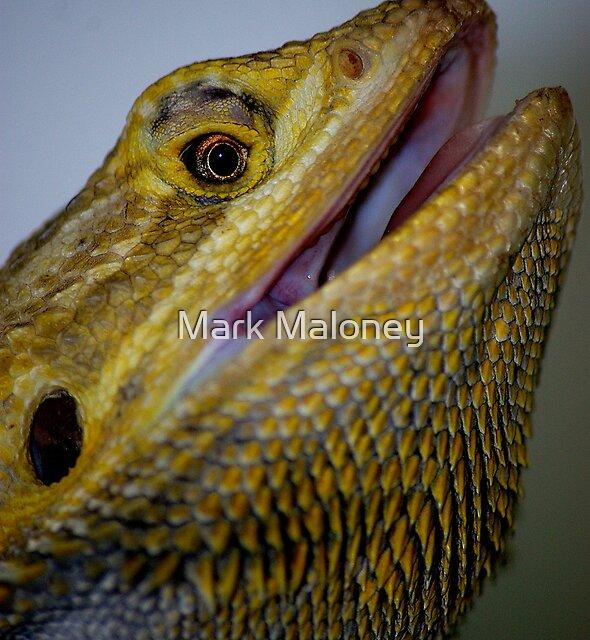 Bearded Dragon by Mark Maloney
