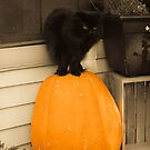 Pumpkin Guard Cat by David Owens