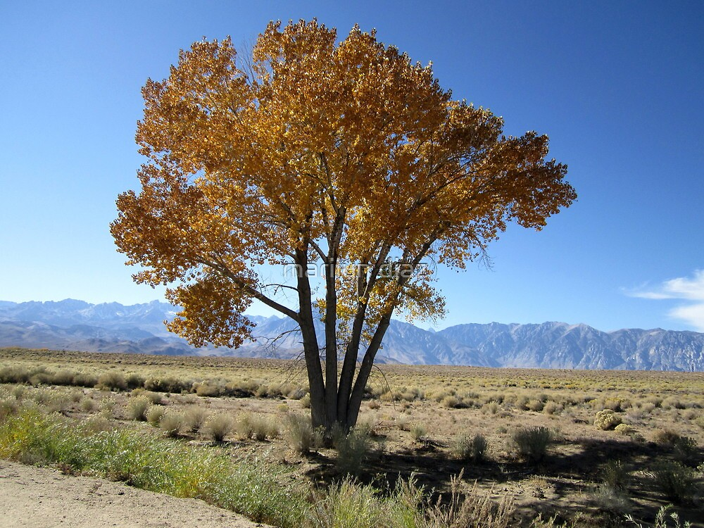 Readhead Of Autumn by marilyn diaz