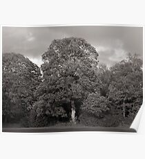 Autumn Trees, Bute Park, Cardiff Poster
