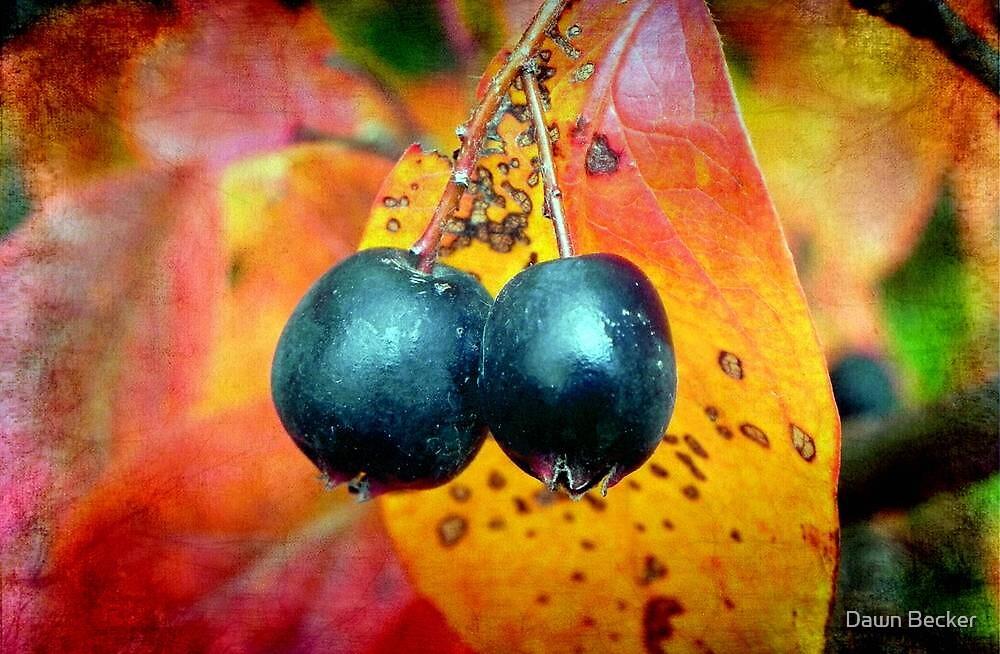 Fall Berries © by Dawn Becker