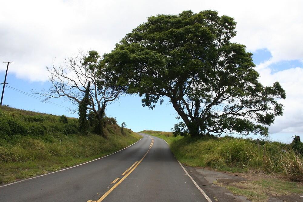 LONE UPCOUNTRY TREE by Katie Grove-Velasquez