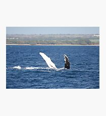 Humpback Whale Belly Up Photographic Print
