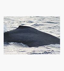 Dorsal Fin - Humpback Whale Photographic Print