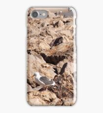 Seagull On Rocks... iPhone Case/Skin
