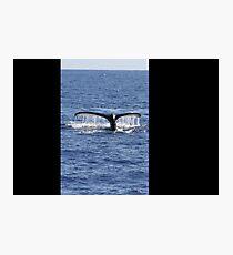 Humpback Whale Fluke Up Dive Photographic Print