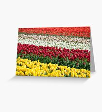 Tulip Fields Forever Greeting Card