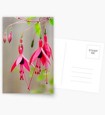 pink fuschia Postcards