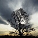 Atmospheric Sky and Tree by IvanGore