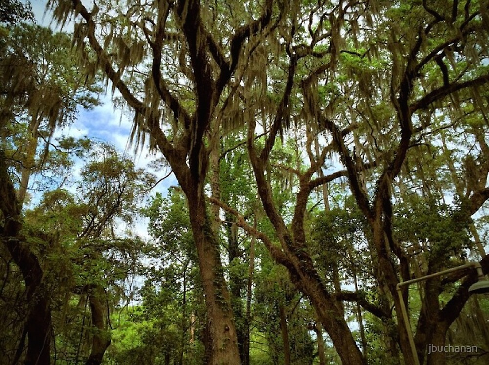 Mossy Jungle by jbuchanan