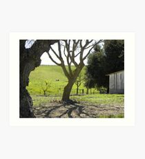 King City Rancho Trees Pasture Art Print
