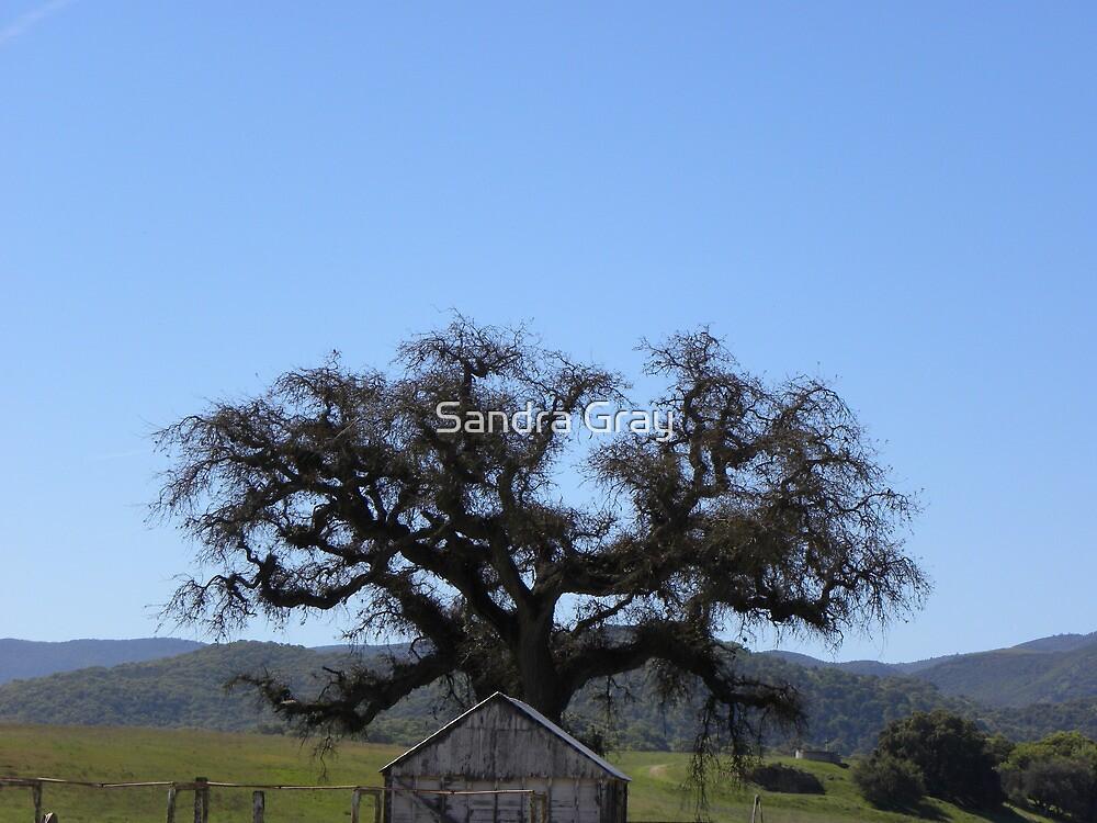 King City Rancho Oak by Sandra Gray