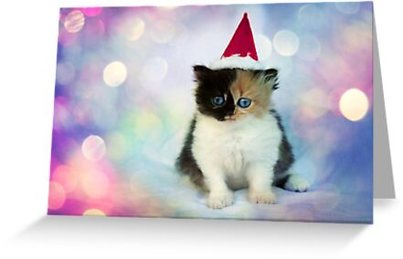 Christmas Kitten by micklyn