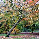 Autumn Fall by Chris Goodwin