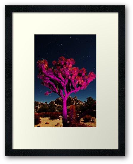 Láminas enmarcadas «Árbol de Joshua» de Zohar Lindenbaum | Redbubble