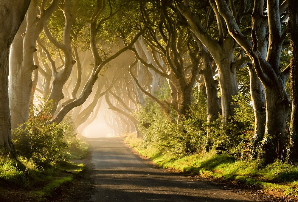 Magical Morning at the Dark Hedges by Kristin Repsher