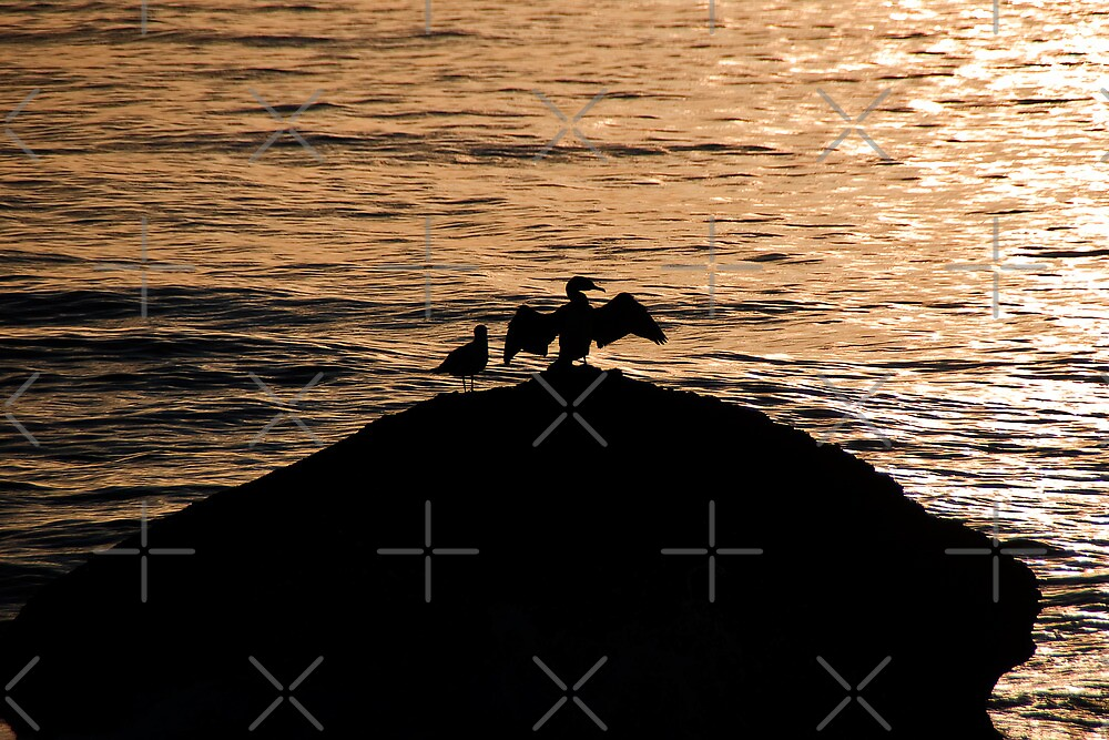 Gull and Cormorant by Country  Pursuits