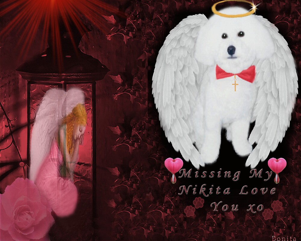 """ⓛ ⓞ ⓥ ⓔ.♥➷♥•*Dedication To My Baby Nikita* """"Oh How I Miss U XO* """"Dogs are miracles with paws.""""ⓛ ⓞ ⓥ ⓔ.♥➷♥•* by ✿✿ Bonita ✿✿ ђєℓℓσ"""