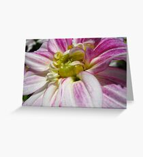 Flowers for the Breast Cancer  Greeting Card