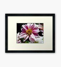 Flowers for Breast Cancer  Framed Print