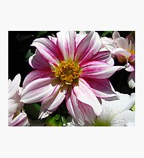 Flowers for Breast Cancer  Photographic Print