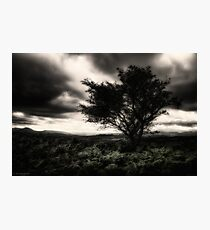 once upon a hill Photographic Print