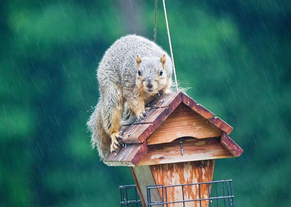 Squirrel Eating in the Rain by chelseysue