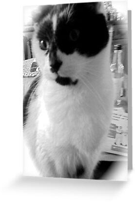Pussy cat by bertie01