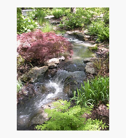 Bubbling Brook in the Garden Photographic Print