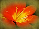 Hot Orange by MotherNature